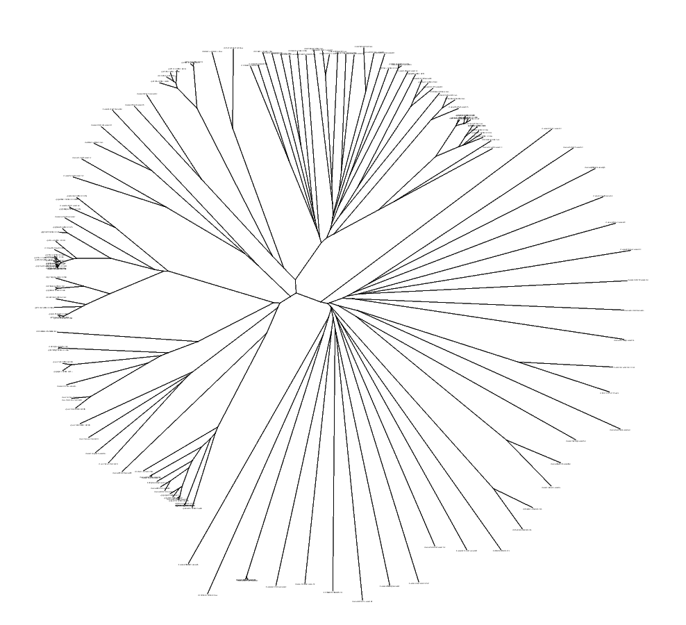 phylogenetic tree picture